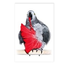african grey Postcards (Package of 8)