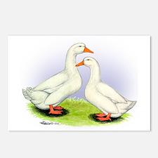 Pekin Ducks Postcards (Package of 8)
