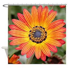 Orange and Yellow Gazania Flowers i Shower Curtain