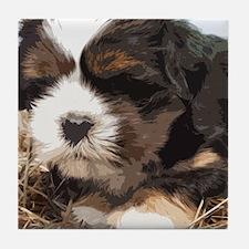 Shi tzu puppy Tile Coaster