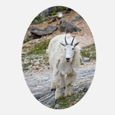 Mountain Goat Oval Ornament
