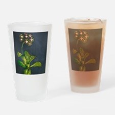 Funny Primrose Drinking Glass