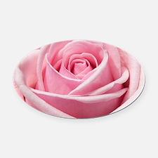 Light Pink Rose Close Up Oval Car Magnet