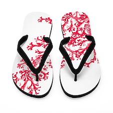 Cute Aquatic Flip Flops