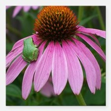 """Tiny Frog on Echinacea F Square Car Magnet 3"""" x 3"""""""