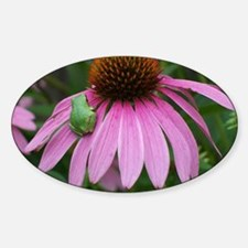 Tiny Frog on Echinacea Flower Decal