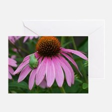 Tiny Frog on Echinacea Flower Greeting Card
