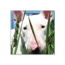 Cute English Bull Terrier Hiding in the Gr Sticker
