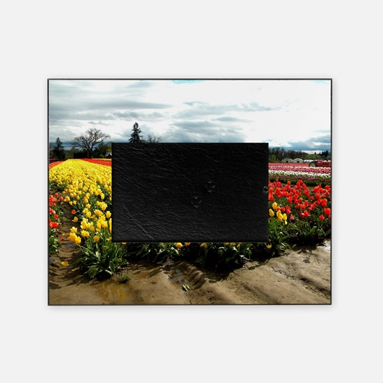 Rainbow Field Picture Frame