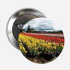 """Rainbow Field 2.25"""" Button"""