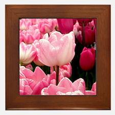 Graceful Pink Framed Tile