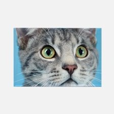 Beautiful Green Eyed Kitty Cat Magnets