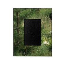 Green Wilderness Picture Frame