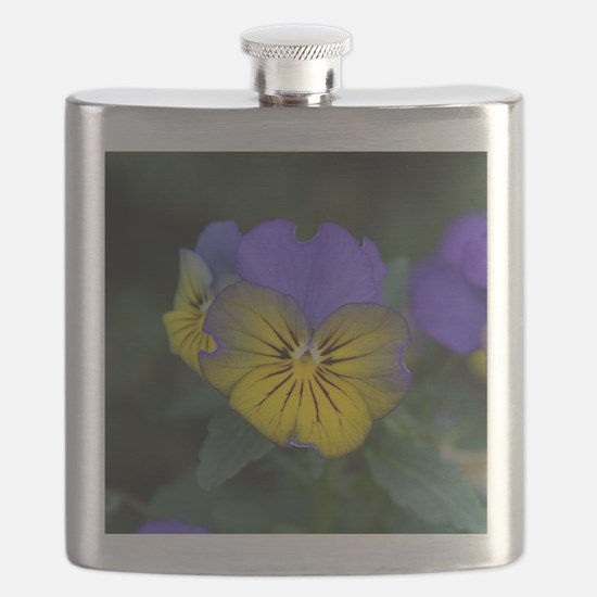 Johnny Jump Up (close-up) Flask