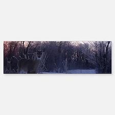 Whitetail Deer Winter Bumper Bumper Bumper Sticker