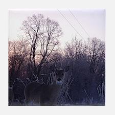 Whitetail Deer Winter Tile Coaster