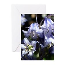 Bluebell Greeting Cards (Pk of 10)