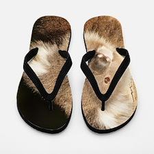 Unique Koala Flip Flops