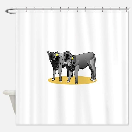 Black Angus Calves Shower Curtain
