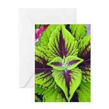 Coleus Leaves #2 Greeting Card