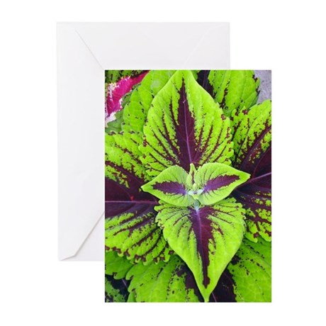 Coleus Leaves #2 Greeting Cards