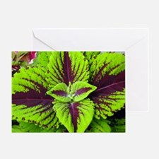 Coleus Leaves #1 Greeting Card