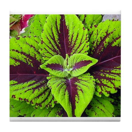 Coleus Leaves #1 Tile Coaster