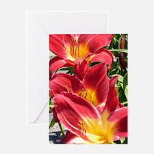 Crimson Pirate Daylily #2 Greeting Card