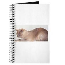 Lilac Burmese Cat Journal