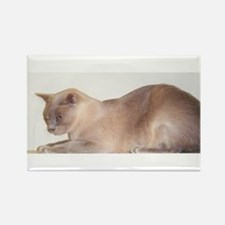 Lilac Burmese Cat Magnets