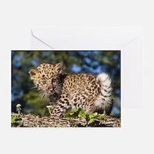 Leopard Kitten Greeting Cards (pk Of 10)