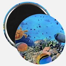 Sea Life Magnets