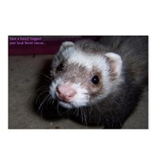 Ferret Postcards (Package of 8)