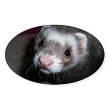 Ferret Oval Decal