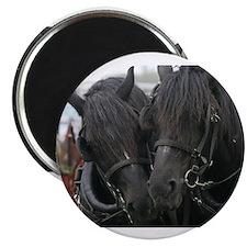 Cute Horses Magnet