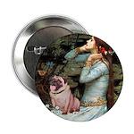 Ophelia / Fawn Pug 2.25