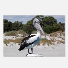 Pelican Standing on Watch Postcards (Package of 8)