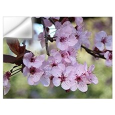 Cherry blossoms in spring time Wall Decal