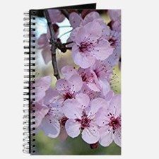 Cherry blossoms in spring time Journal