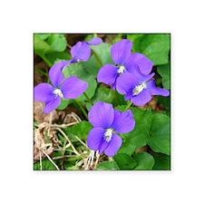 """Are Violets Blue? Square Sticker 3"""" x 3"""""""
