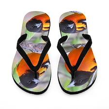 Northern Orioles Flip Flops