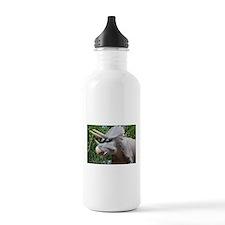 Dinosaur Triceratops Water Bottle