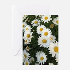 Field of Daisies Greeting Cards