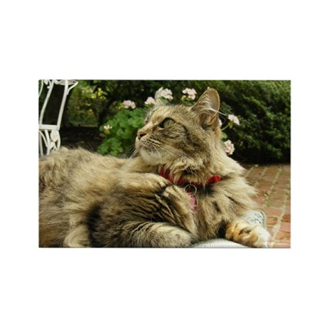 Maine Coon cat tabby Rectangle Magnet
