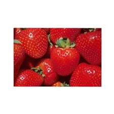 Strawberries Rectangle Magnet
