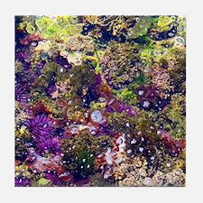 Sea Jewels: Low Tide  Tile Coaster
