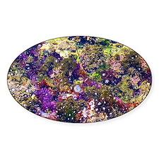 Sea Jewels: Low Tide  Decal