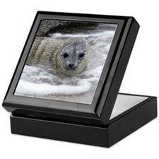 Harbor Seal Pups Keepsake Box