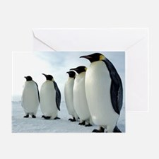 Lined up Emperor Penguins Greeting Card