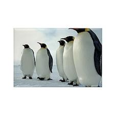 Lined up Emperor Penguins Rectangle Magnet